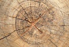Alte Baumstumpfbeschaffenheit Stockfotografie