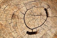 Alte Baumstumpfbeschaffenheit Stockfoto