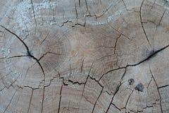 Alte Baumstumpfbeschaffenheit Lizenzfreies Stockfoto