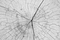 Alte Baumstumpfbeschaffenheit und -hintergrund Lizenzfreies Stockbild