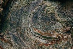 Alte Baumstumpfnahaufnahme, Sprünge und Altersringe Stockfotos