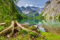 Alte Baumwurzel auf den Ufern von Obersee See in den Alpen Stockfotos