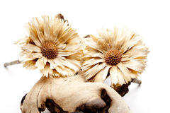 Alte Baumwurzel mit trockener Blume Stockbild