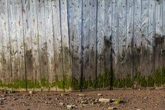 Alte befleckte Planke der Holz-Wand Lizenzfreies Stockbild