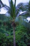 Alte, belle palme, chiaro cielo, la sabbia, i tropici caldi Immagini Stock