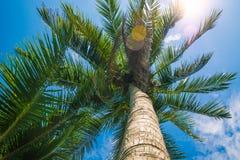 Alte, belle palme, chiaro cielo, la sabbia, i tropici caldi Fotografie Stock