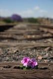 Alte benutzte Eisenbahnlinien herein und kleine Blume in der Farbe Lizenzfreie Stockfotos