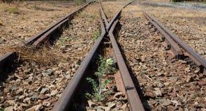 Alte benutzte Eisenbahnlinien herein und kleine Blume in der Farbe Stockfotografie
