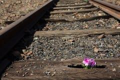 Alte benutzte Eisenbahnlinien herein und kleine Blume in der Farbe Stockfotos