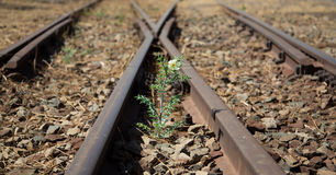 Alte benutzte Eisenbahnlinien herein und kleine Blume in der Farbe Lizenzfreies Stockbild