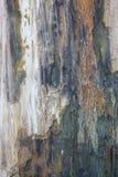 Alte Beschaffenheit des versteinerten Holzes Stockfotografie