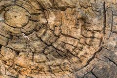 Alte Beschaffenheit trunk2 Stockbild