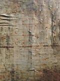 Alte Beschaffenheit und Hintergrund des hölzernen Brettes des Schmutzes Lizenzfreies Stockbild