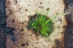 Alte Betondecke mit dem grünen Gras gewachsen in seinem Loch Lizenzfreie Stockfotos