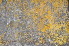 Alte Betonmauer, abgebrochene Farbe, graue Beschaffenheit, Hintergrund Lizenzfreie Stockbilder