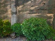 Alte Betonmauerhintergrundbeschaffenheit Lizenzfreie Stockfotos