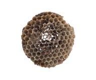 Alte Bienenwabe lokalisiert Lizenzfreies Stockbild
