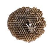 Alte Bienenwabe lokalisiert Stockfotos