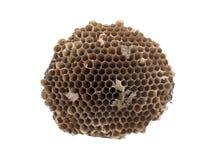 Alte Bienenwabe lokalisiert Lizenzfreie Stockbilder