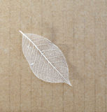 Alte Blätter bereiten ein Papierhintergrund auf Stockbilder