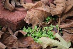 Alte Blätter und neue Anlagen Stockfoto