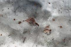 Alte Blätter und schmelzende Show Stockbild