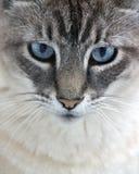 Alte blaue Augen Lizenzfreies Stockfoto