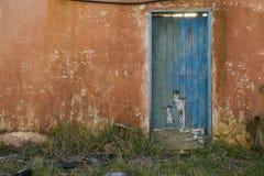 Alte blaue Holztür auf einer orange Wand in einem verlassenen Haus Stockbild