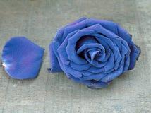 Alte Blaurose auf Holztisch Stockfoto