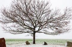 Alte bloße Eiche in der Winterzeit Stockfotografie