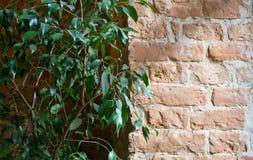 Alte Blockwand-Fotobeschaffenheit stockbilder
