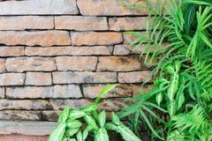 Alte Blockwand von Blättern Stockfotos