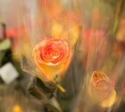 Alte Blume Lizenzfreie Stockfotografie