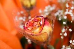 Alte Blume Stockbild