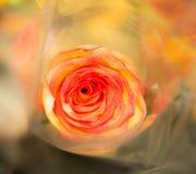 Alte Blume Lizenzfreies Stockbild