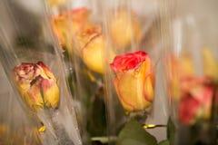 Alte Blume Stockfotografie