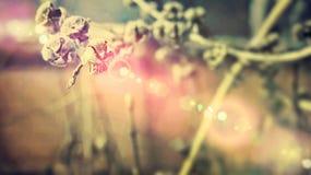 Alte Blume Lizenzfreies Stockfoto