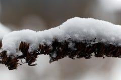 Alte Blume bedeckt mit Schnee Lizenzfreies Stockfoto