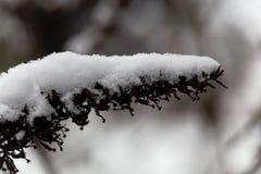 Alte Blume bedeckt mit Schnee Lizenzfreie Stockbilder