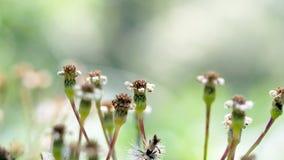 Alte Blumen Stockbild