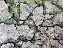 Alte Brückenfliesen, die grauen geknackten Steine, in den Sprüngen des grünen Mooses, in der Ecke liegt ein beige Herbstblatt Stockbild