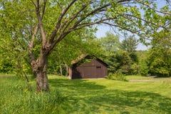 Alte braune Scheune gestaltet durch einen Baum Stockfoto