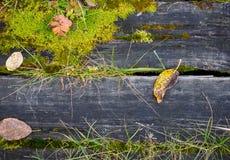 Alte Bretter und Gras als Hintergrund Lizenzfreies Stockfoto