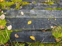 Alte Bretter und Gras als Hintergrund Lizenzfreie Stockfotos