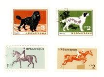 Alte Briefmarken mit Hunden und Pferden Stockbild