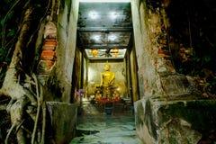 Alte Buddha-Statuen in der alten Kirche, bedeckt mit Bäumen wurzelt mit Lichteffekt Stockbilder
