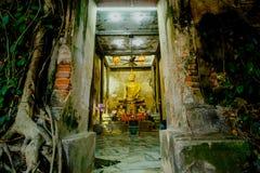 Alte Buddha-Statuen in der alten Kirche, bedeckt mit Bäumen wurzelt mit Lichteffekt Lizenzfreie Stockfotografie