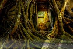 Alte Buddha-Statuen in der alten Kirche, bedeckt mit Bäumen wurzelt mit Lichteffekt Stockfotografie