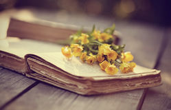 Alte Butterblumeen des offenen Buches und des Gelbs Stockbild