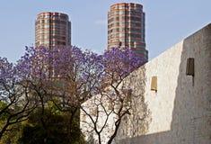 Alte costruzioni di aumento con l'albero del Jacaranda Fotografie Stock